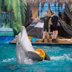 Дельфинарии, океанариумы Острогожска