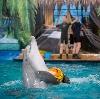 Дельфинарии, океанариумы в Острогожске