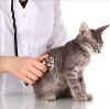 Ветеринарные клиники в Острогожске